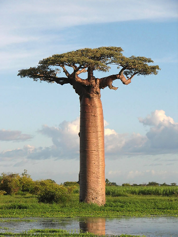 baobab_00.jpg